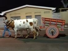 Colorful Oxen cart