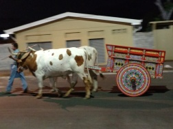 Colorful Oxen cart