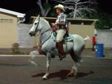 High stepping horses